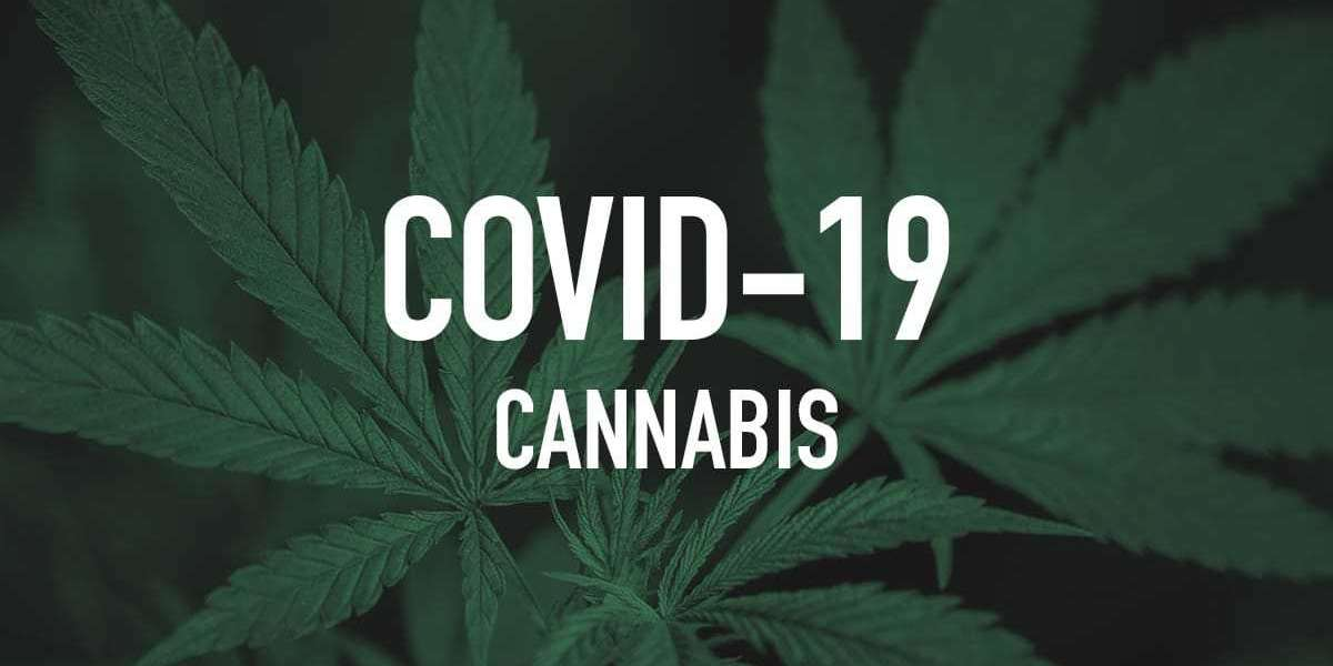 Study: THC In Marijuana Could Help Avert Fatal COVID-19 Complications