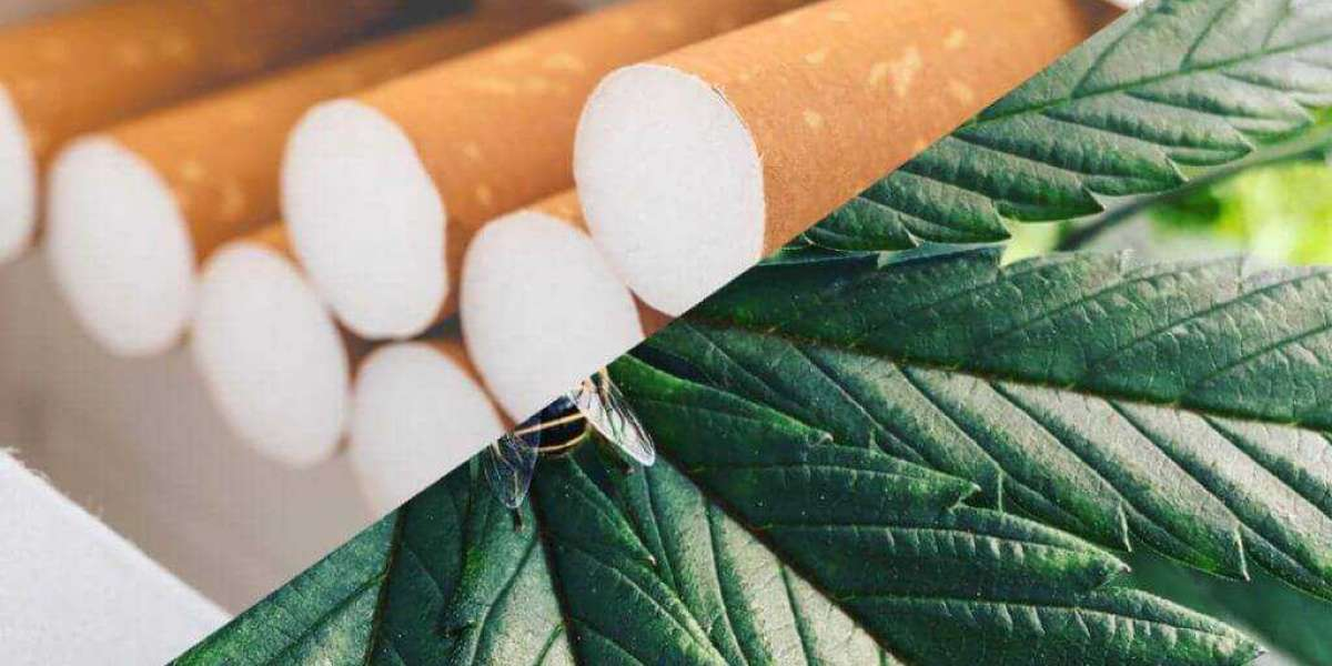First Big Marijuana Tobacco Player Backs Out After Bankruptcy