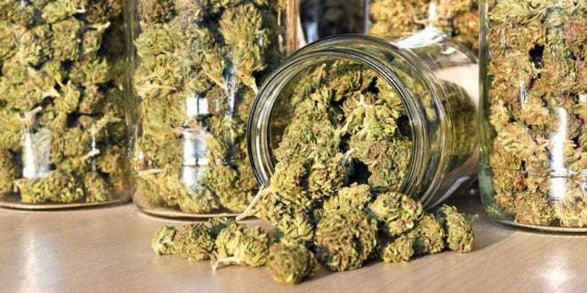Michigan Marijuana May Be Contaminated With Mold