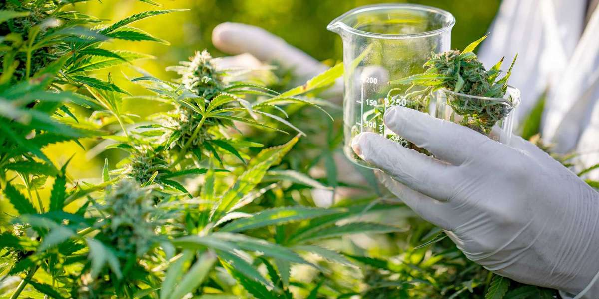 DEA Is Closer Then Ever To Allow Companies To Grow Marijuana For Scientific Research