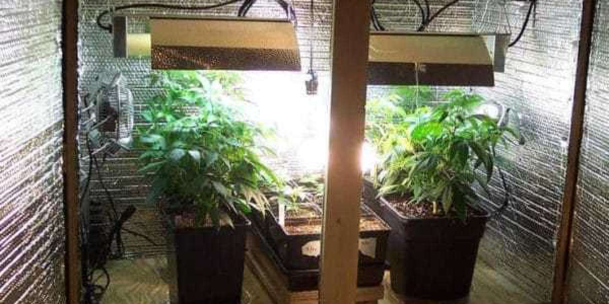 The Best and Most Cheapest Way To Grow Marijuana At Home On A Tight Budget