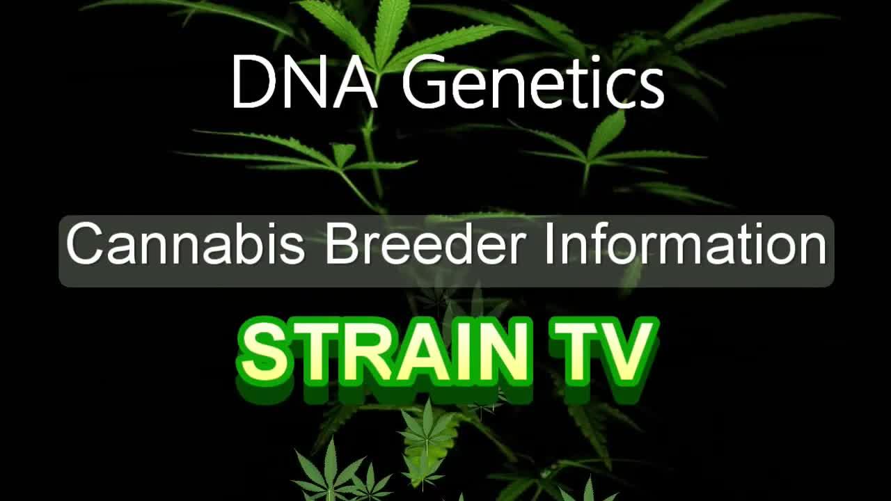 DNA Genetics - Cannabis Strain Series - STRAIN TV