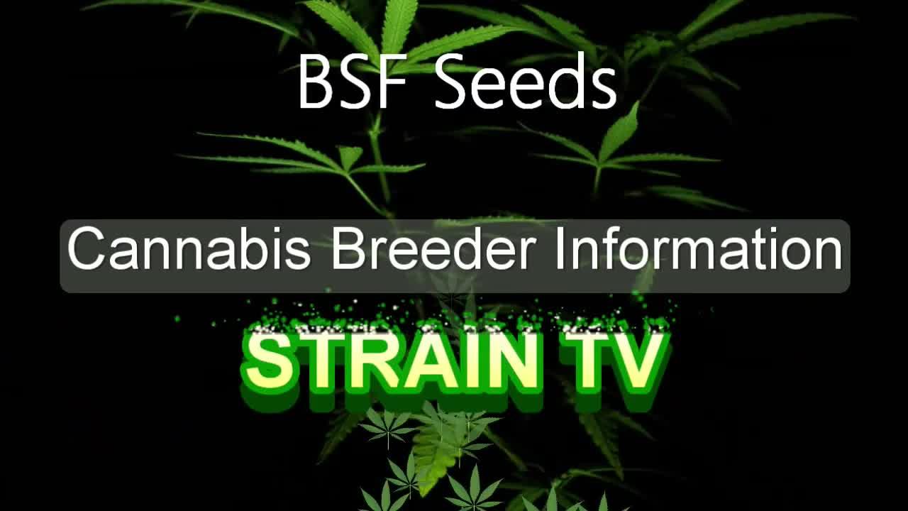 BSF Seeds - Cannabis Strain Series - STRAIN TV