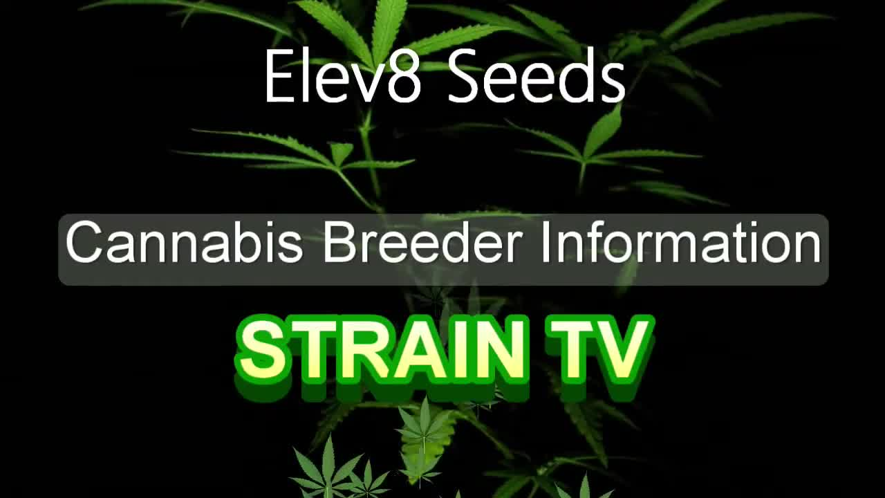 Elev8 Seeds - Cannabis Strain Series - STRAIN TV