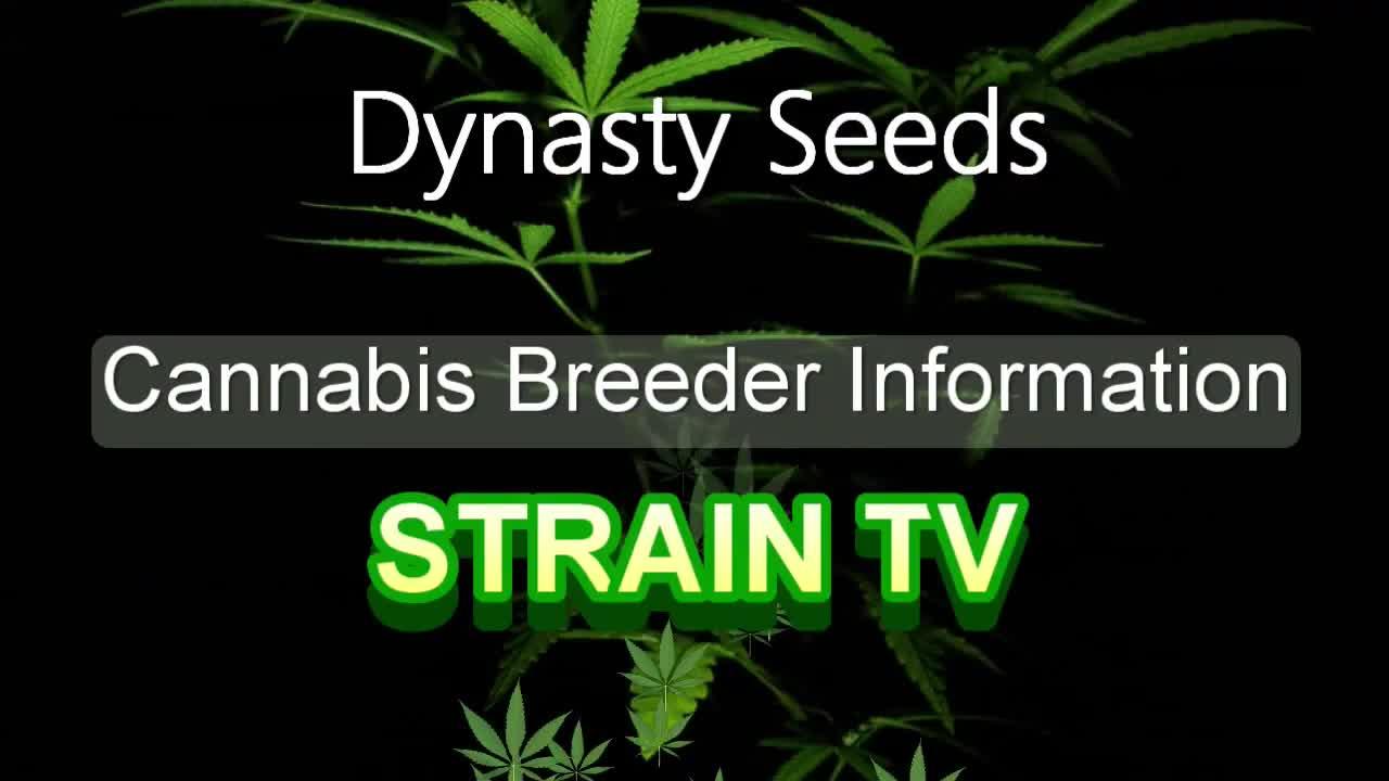 Dynasty Seeds - Cannabis Strain Series - STRAIN TV